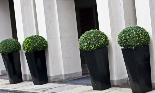 artificial boxwood topiary