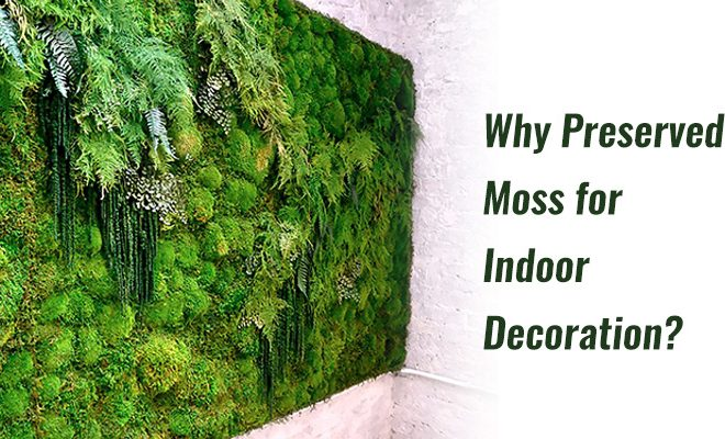 Why Preserved Moss for Indoor Decoration?